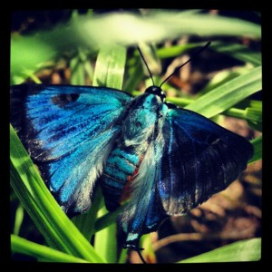 Blue Butterfly by Archangel Productions